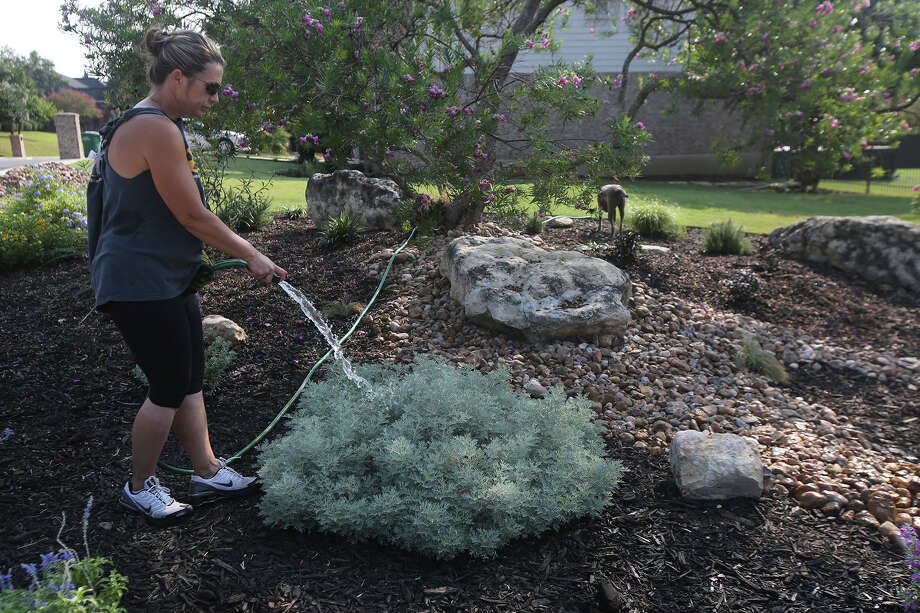 Valerie Roderick waters some recently planted shrubs Friday in her front yard in the Arbor subdivision on San Antonio's North Side. Roderick said she has drought-tolerant plants and is careful about water use but doesn't want to lose the $2,000 investment in her landscape because of city-imposed watering restrictions. Photo: John Davenport /San Antonio Express-News / ©San Antonio Express-News/John Davenport