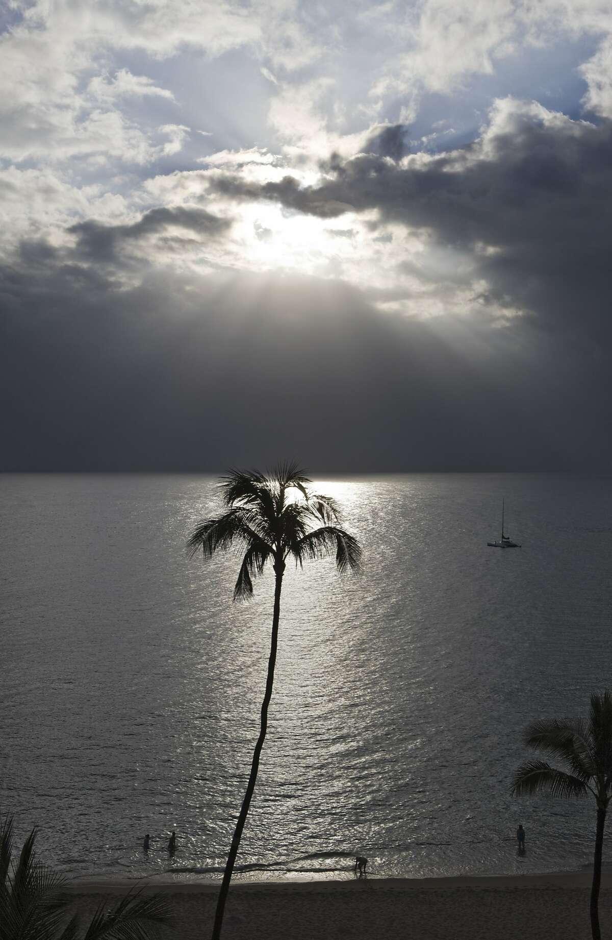 Coconut Palm with Backlight, Maui, Hawaii, USA (Photo by Reinhard Dirscherl/ullstein bild via Getty Images)