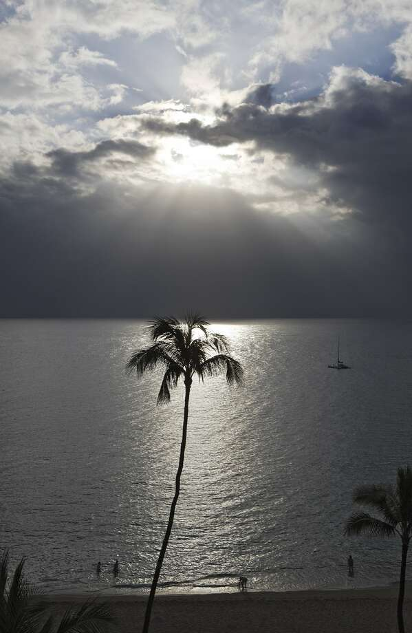 Coconut Palm with Backlight, Maui, Hawaii, USA  (Photo by Reinhard Dirscherl/ullstein bild via Getty Images) Photo: Ullstein Bild, Getty Images