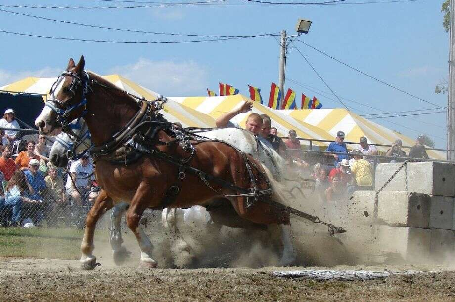 Lots of entertainment options, including horse pulls, are a feature of every large agricultural fair in the state. The season moves into full swing on Labor Day weekend. Photo: Contributed Photo