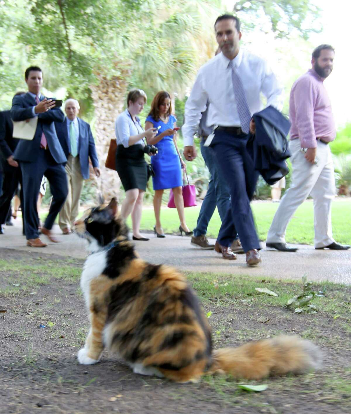 Texas Land Commissioner George P. Bush walks Wednesday toward Bella, the Alamo Cat, while on a tour of the Alamo grounds. Bush was in San Anotnio to celebrate the $31.5 million the General Land Office received to help preserve and develop the Alamo.
