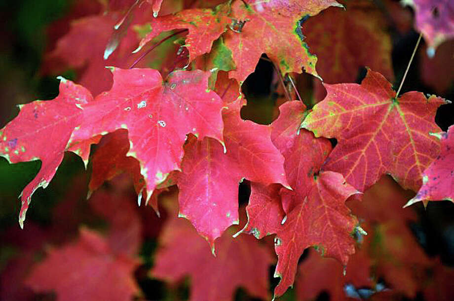 """To columnist Judith Marks-White, September is """"the sneaky month that surprises us with its sudden appearance that puts us in transition mode. But we can't escape its presence: an acorn here, a red leaf there — and seasons shift."""" Photo: File Photo / Westport News"""