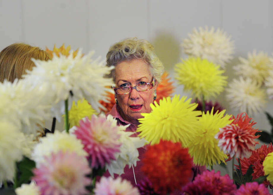 The Greenwich Dahlia Society's annual Dazzling Dahlias Show at the Greenwich Pinetum at 130 Bible St,, Cos Cob, is slated for Oct. 3 and 4. for details, visit www.gecgreenwich.org or call 203-869-9242. Photo: Bob Luckey / Bob Luckey / Greenwich Time