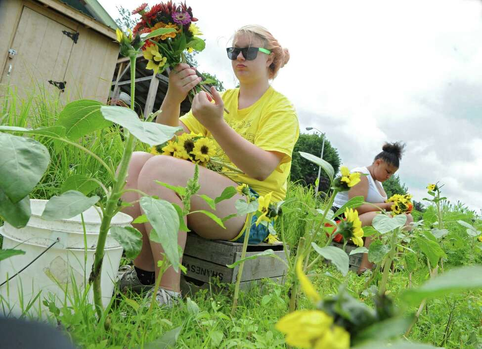 Troy High School students Carrie Secor, 15, left, picks flowers with Nadia Woodby, 14, at the Capital Roots Produce Project community garden on Tuesday, July 7, 2015 in Troy, N.Y. (Lori Van Buren / Times Union)