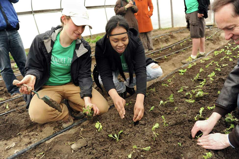 Farm manager Julia Cosgrove, left, and Sharayjah Williams, 17, center, plant lettuce in a hoop house with Acting State Health Commissioner Howard Zucker, right, on Wednesday, April 8, 2015, at Capital Roots in Troy, N.Y. Zucker visited the urban farm during National Public Health Week to discuss how access to healthy food helps prevent obesity. (Cindy Schultz / Times Union)