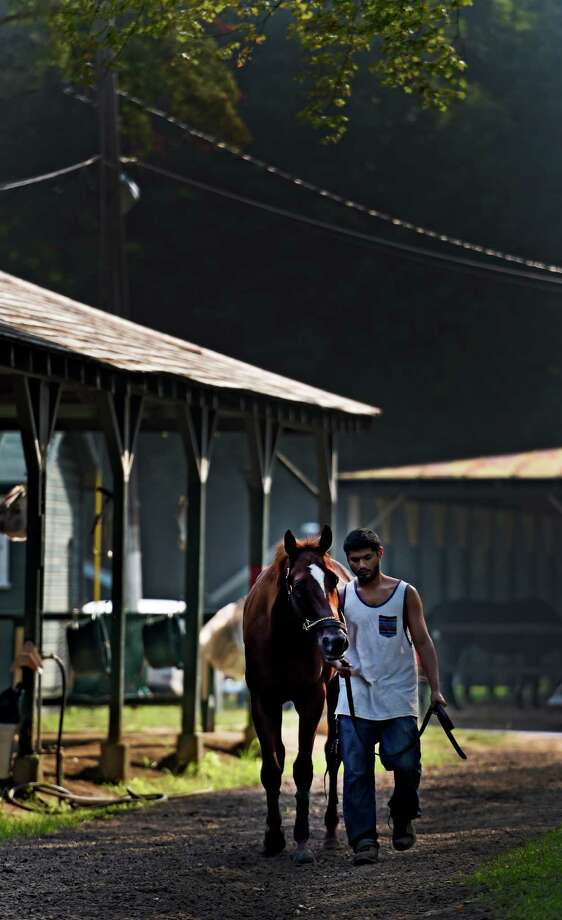 A horse is cooled out in the barn area of the main track Thursday morning Sept. 3, 2015 at the Saratoga Race Course in Saratoga Springs, N.Y.    (Skip Dickstein/Times Union) Photo: SKIP DICKSTEIN