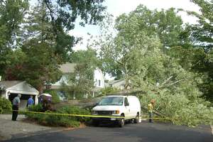 Man seriously injured after large tree falls in Old Greenwich - Photo