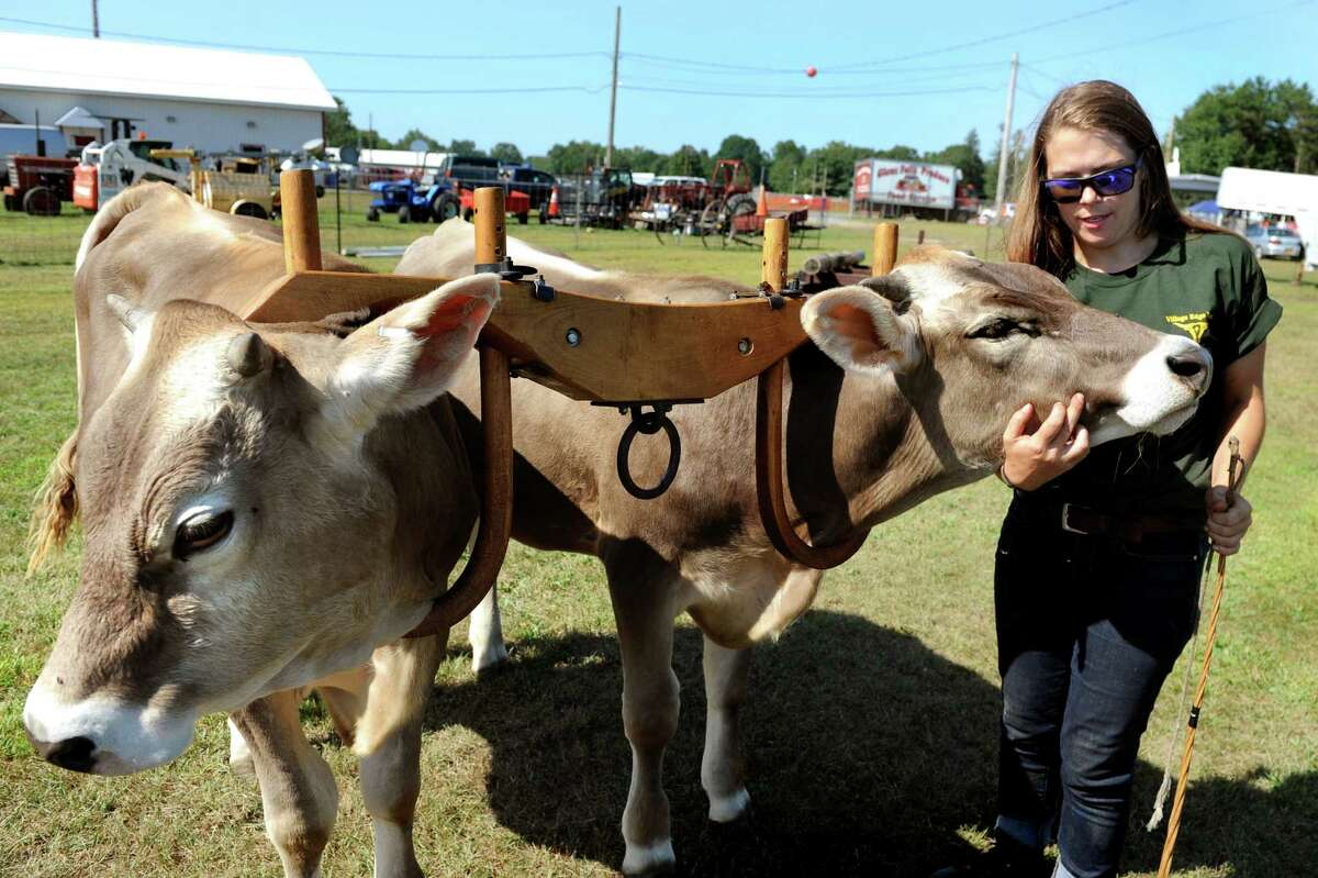 Cheyanne Hall of Village Edge Farm in Cambridge works with her brown Swiss working steers Star, left, and Bright during the Schaghticoke Fair on Saturday, Sept. 5, 2015, at the Schaghticoke Fairgrounds in Schaghticoke, N.Y. The fair continues through Monday from 10 a.m. to 10 p.m. Visit www.schaghticokefair.com for more information. (Cindy Schultz / Times Union)