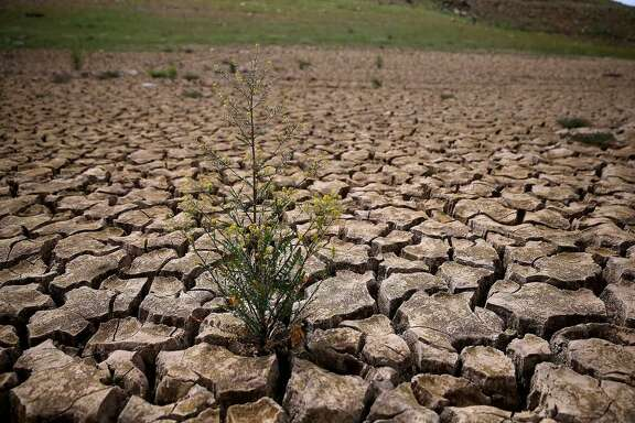 Weeds grow in dry cracked earth that used to be the bottom of Lake McClure on March 24, 2015 in La Grange, California. More than 3,000 residents in the Sierra Nevada foothill community of Lake Don Pedro who rely on water from Lake McCLure could run out of water in the near future if the severe drought continues. Lake McClure is currently at 7 percent of its normal capacity and residents are under mandatory 50 percent water use restrictions.
