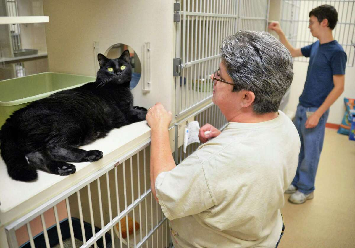 Midnight, left, gets some socialization from cat volunteers, mom and son, Diane and Derek Raushi of Saratoga at the Saratoga County Animal Shelter Friday Sept. 4, 2015 in Ballston Spa, NY. (John Carl D'Annibale / Times Union)