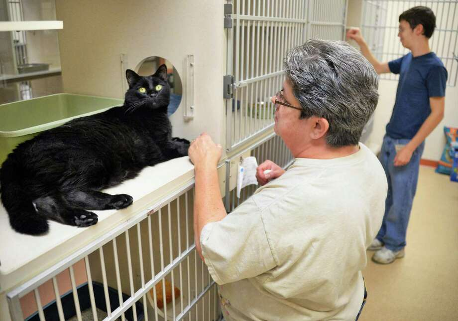 Midnight, left, gets some socialization from cat volunteers, mom and son, Diane and Derek Raushi of Saratoga at the Saratoga County Animal Shelter Friday Sept. 4, 2015 in Ballston Spa, NY.  (John Carl D'Annibale / Times Union) Photo: John Carl D'Annibale / 00033240A