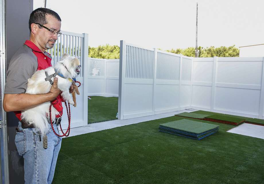 Camp Bow Wow owner Jose Morillo inspects the new Katy facility's outdoor play area with his two Chihuahuas Pepe and Taco.   Camp Bow Wow owner Jose Morillo inspects the new Katy facility's outdoor play area with his two Chihuahuas Pepe and Taco. Photo: Diana L. Porter, Freelance / © Diana L. Porter