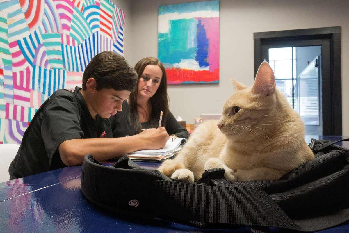 A. J. Manlove, 14, works on math problems with the help of TutorVille's Jess Rogers and Leo, the cat-in-residence.