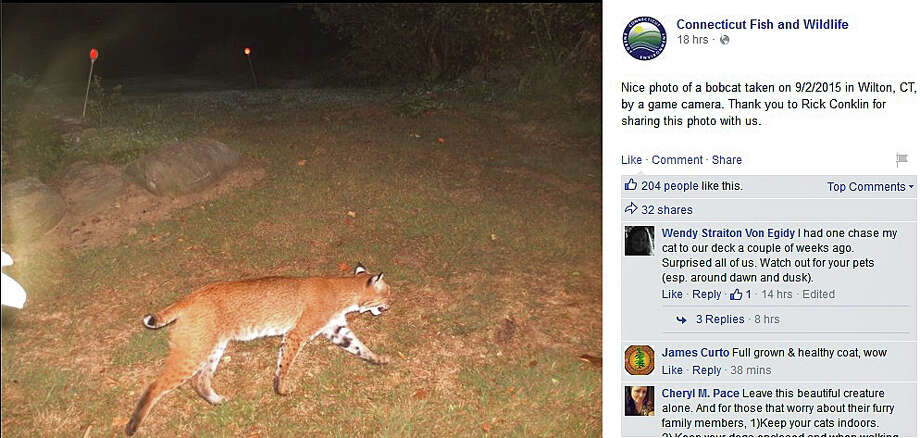 Rick Conklin recently shared the photo on the Connecticut Fish and Wildlife's Facebook page. The photo taken at 4:34 a.m. on Sept. 2, 2015 shows the regal beast walking in a yard.