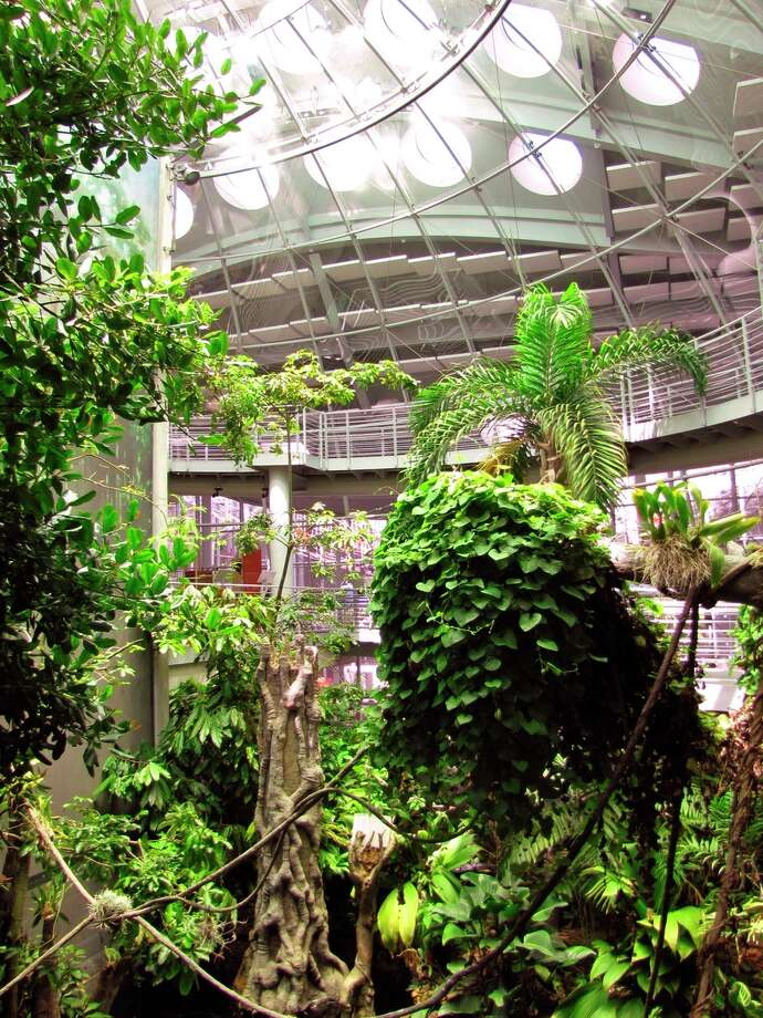 The rain forest at the California Academy of Sciences: the ecosystem of Borneo, Madagascar and Costa Rica.