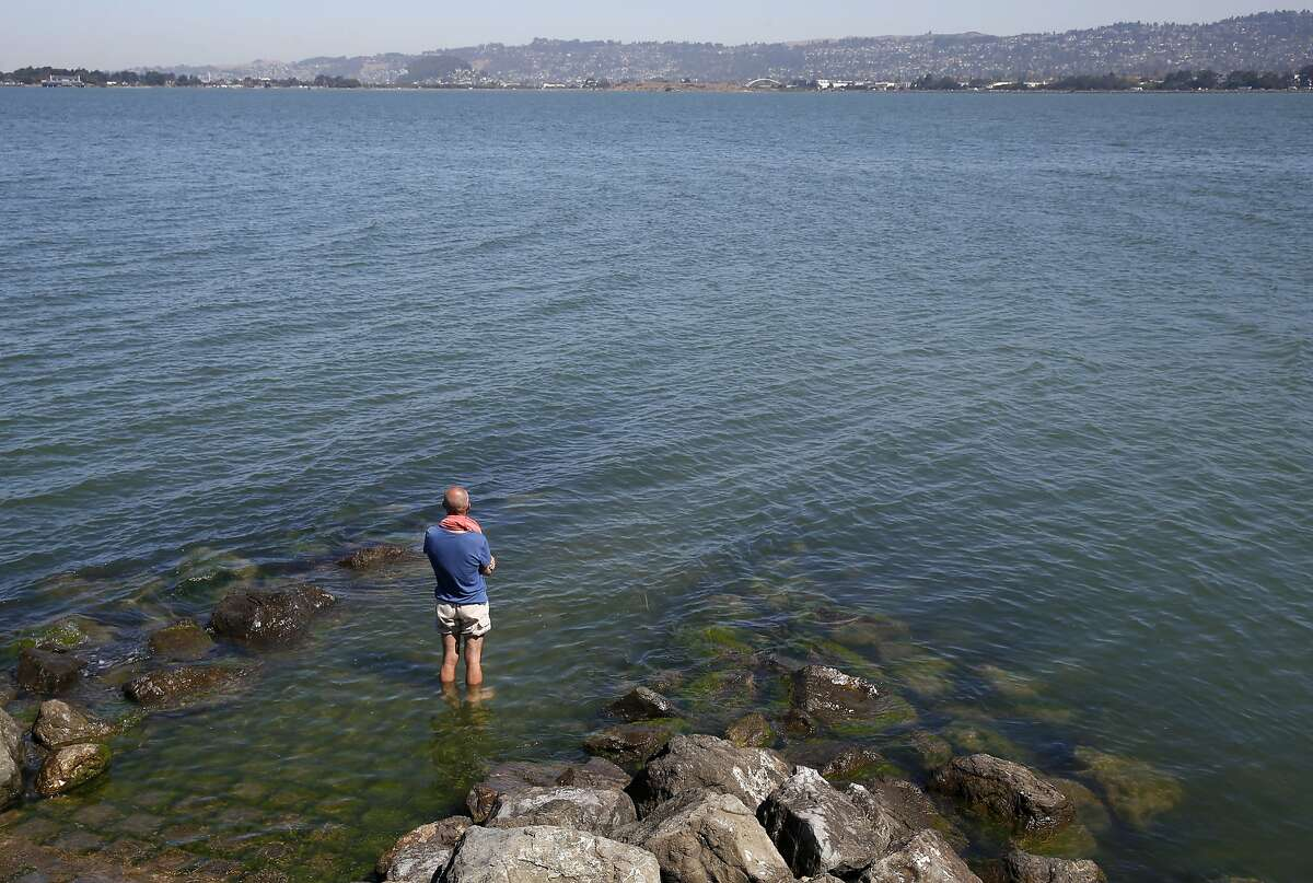 Y. Mogadam cools his heels in the bay at Marina Park in Emeryville, Calif. on Wednesday, Sept. 9, 2015. The Bay Area endured a third straight day of record breaking heat.