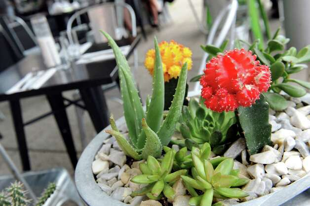 Succulent plants add color to the sidewalk dining on Friday, Sept. 4, 2015, at Ama Cocina in Albany, N.Y. (Cindy Schultz / Times Union) Photo: Cindy Schultz / 00033218A