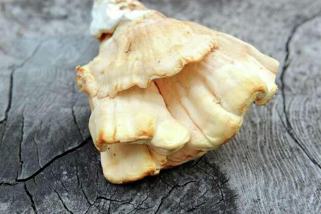 Chicken of the woods mushrooms on Saturday, Aug. 29, 2015, in Delmar, N.Y. (Cindy Schultz / Times Union) Photo: Cindy Schultz / 00033132A