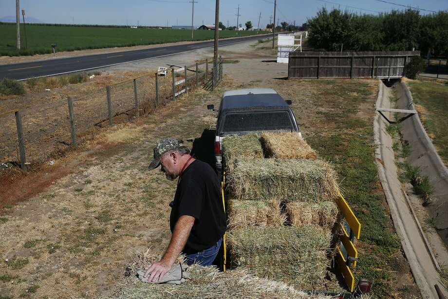 Dennis Baker, 53, pauses in the heat after loading an order of hay onto a customer's trailer at his home on July 4 in Tracy.  Photo: Leah Millis, The Chronicle