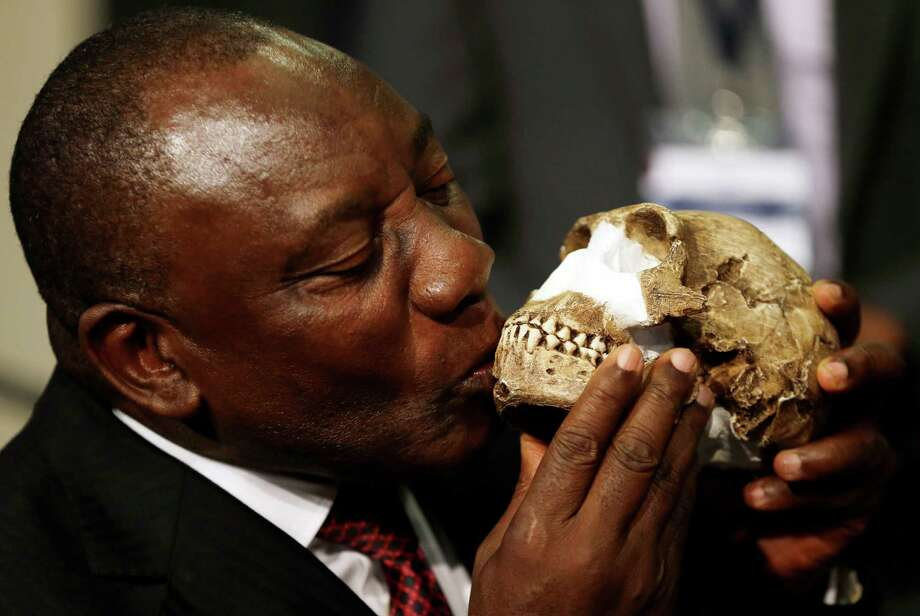 South Africa Deputy President Cyril Ramaphosa, kisses a reconstruction of Homo naledi's face during the announcement made at Maropeng Cradle of Humankind in Magaliesburg, South Africa, Thursday, Sept. 10, 2015.  Scientists say they've discovered a new member of the human family tree, revealed by a huge trove of bones in a barely accessible, pitch-dark chamber of a cave in South Africa. Photo: Themba Hadebe, AP / AP