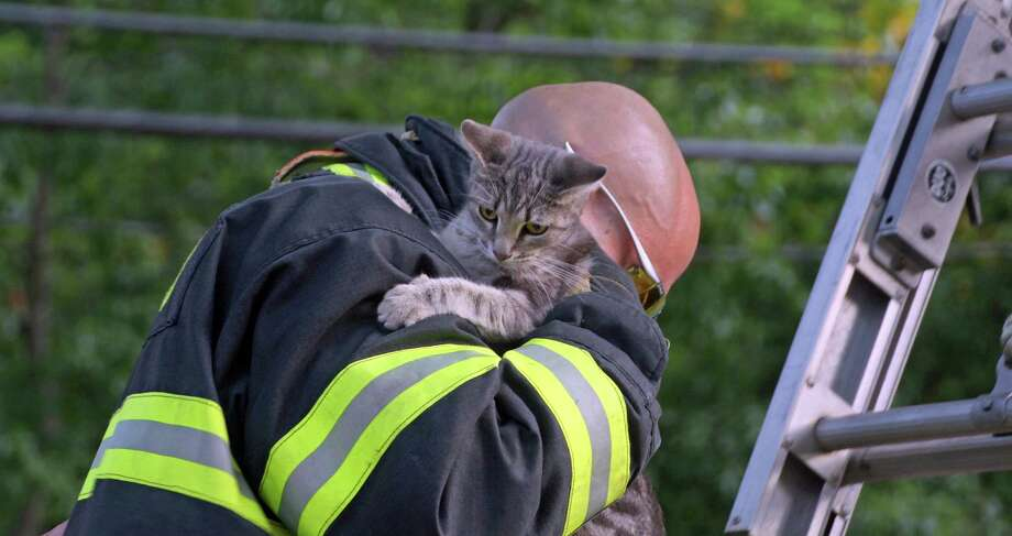 Firefighter Erik Hubbell cradles a kitten he rescued from a tree in Tunxis Hill Park on Wednesday morning. Photo: Sheryl Paul / Contributed /  Fairfield Citizen contributed