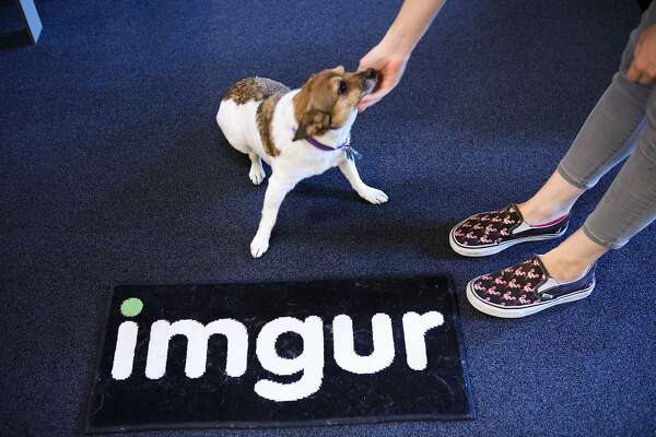 Imgur Community Manager, Sarah Schaaf pets her dog Chi Chi at Imgur's offices in San Francisco, California, on Wednesday, Sept. 9, 2015.
