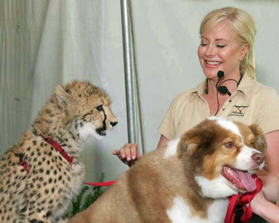 Adaeze, Odie and Marcella Leone, co-founder of the Leo Conservation Center. Photo: Contributed Photo / Greenwich Time Contributed