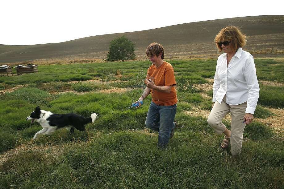 Livestock manager Ellen Skillings (middle) and owner Jeanne McCormack (right) of McCormack Ranch in Rio Vista (Solano County), which has supplied lamb to Niman Ranch since the 1990s. Photo: Liz Hafalia, The Chronicle