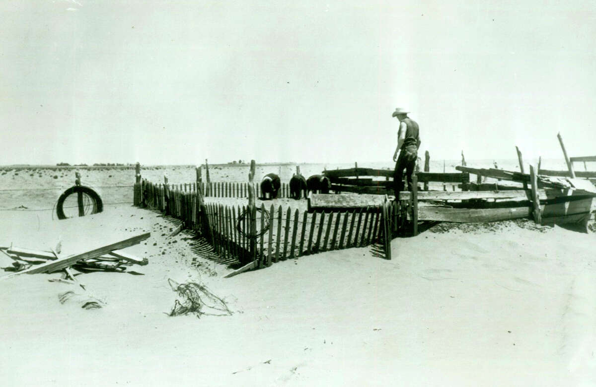 """The serious drought in Texas is brought into sharp focus in this typical scene showing J.B. Hoffman looking at a pig pen raised about four feet by drifting sand on his father's 400-acre farm near Lamesa. Agriculture Secretary Ezra Taft Benson left the drought-sick state after promising farmers and cattlemen a point by point program of government help """"within a matter of hours."""""""