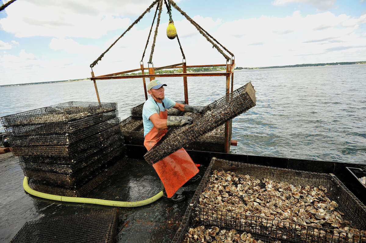 Deck hand Isabel Garcia with Hemlock Oyster Company unloads a tray of oysters in order to change trays off the shore of Stamford, Conn., in the Long Island Sound.