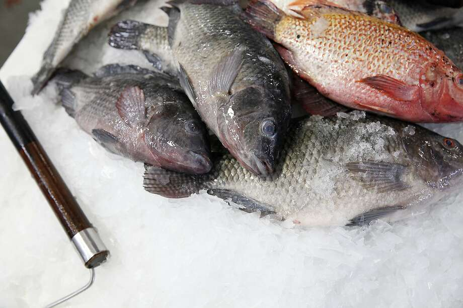 Will tilapia be the only fish left to eat? Photo: Sarah Rice, Special To The Chronicle
