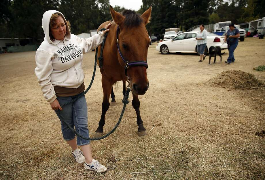 Valley Fire evacuee Joy Fleming of Middletown waits for a veterinarian to look at her ailing horse, Durado, at the Napa County Fairgrounds in Calistoga, Calif., on Monday, September 14, 2015. Photo: Scott Strazzante, The Chronicle