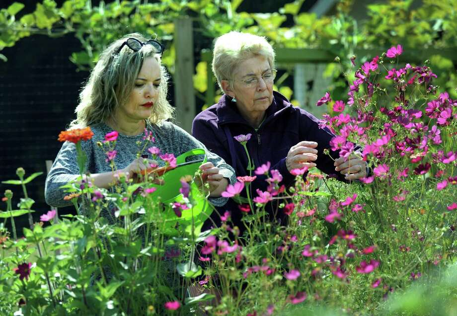 Julia Cencebaugh, of Ridgefield, left and Lorraine Ballato, of Brookfield, both master gardeners, collect seeds on Monday from flowers to use in next year's garden. Master gardeners are using a 3,000-square-foot fruit, vegetable and flower garden adjacent to the University of Connecticut Fairfield County Cooperative Extension office on Stony Hill Road in Bethel as a demonstration garden. Photo: Carol Kaliff / Hearst Connecticut Media / The News-Times
