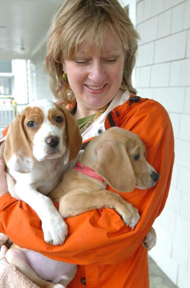 Eileen McFadden, a volunteer from SPCA of Westchester, hold 2 puppies, Sam, left and Tanner, 8 weeks old, at the Greenwich Water Club, on Monday, March 22, 2010.  They are among 50 puppies rescued from the South that will be up for adoption on Saturday, March 27, 2010. Photo: Helen Neafsey / Greenwich Time
