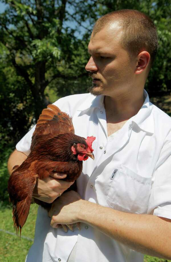 Chef Michael Sohocki with one of his backyard-raised chickens. He predicts more people will demand to know where their food comes from. Photo: William Luther /San Antonio Express-News / WILLIAM LUTHER