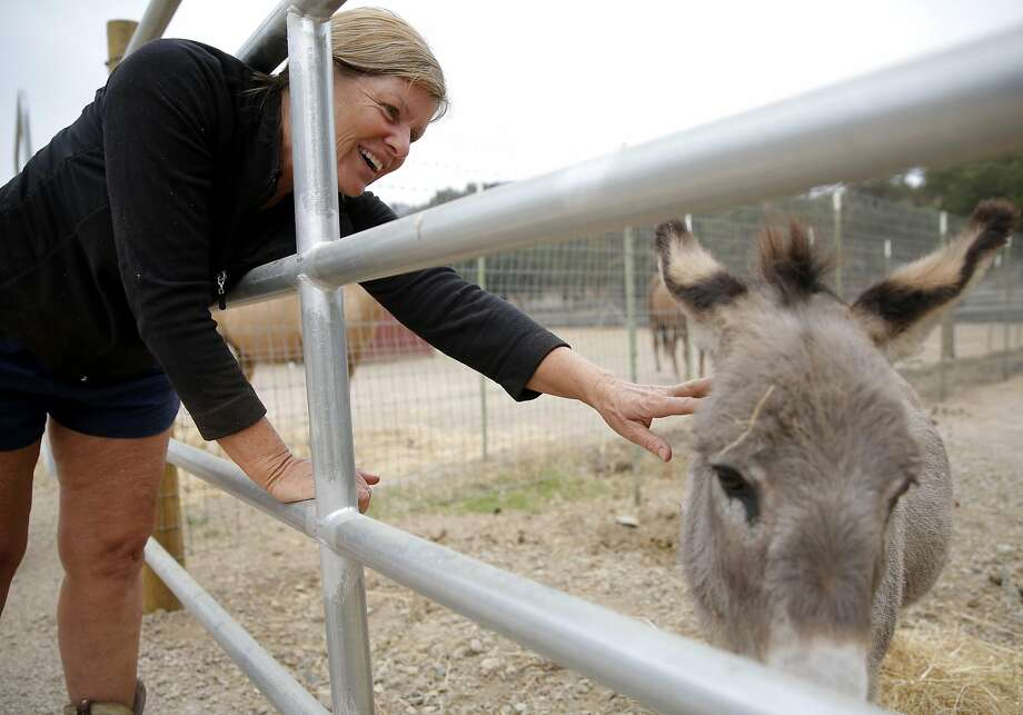 Cheryl Johnston, a Hidden Valley Lake resident, pets a donkey that survived the Valley Fire in Hidden Valley Lake, California, on Tuesday, Sept. 15, 2015. Johnston saved several horses, fought spot fires and eventually stayed overnight in a barn Saturday night as the Valley Fire spread. Photo: Connor Radnovich, The Chronicle