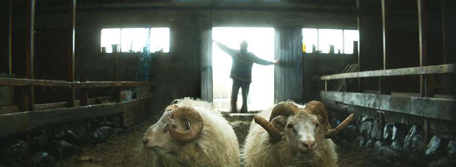 """Gummi (Sigurour Sigurjonsson) faces problems with both humans and animals in the wry Icelandic film """"Rams.""""  Credit: Mill Valley Film Festival Photo: Mill Valley Film Festival"""