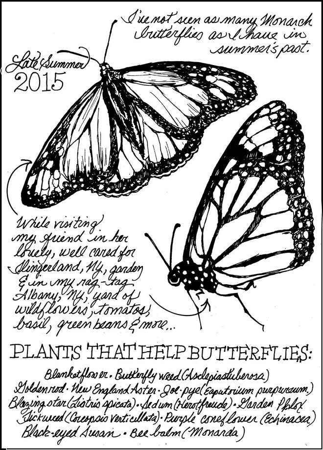 Backyard naturalist for Sept. 20, 2015 for Unwind by Carol Coogan