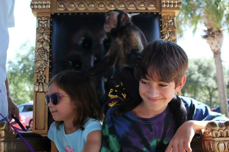 A trio of monkeys that interact with customers at Ms. Monkey's Emporium, a popcorn shop in League City, have been ordered to stay in quarantine after a small child suffered an injury after an interaction with one of the capuchins on site. The owner of the monkeys isn't terribly happy about, saying that his business will suffer. Photo: Ms. Monkey's Emporium