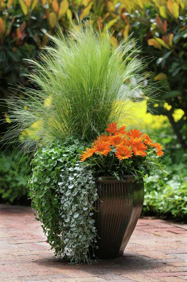 Now is the time to think about planting fall color. Photo: Ball Horticultural Co., HO / Chicago Tribune