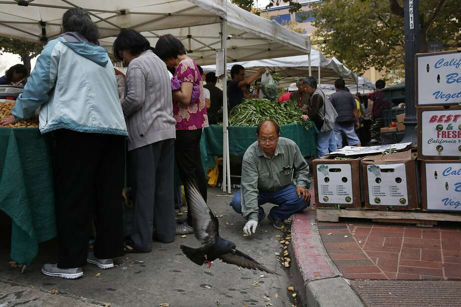 Tzexa Cherta Lee takes a quick break to feed peanuts to a pigeon at the Old Oakland Farmers' Market where the Lees go on weekends to sell their Asian vegetables to help make ends meet since the water shortage. Photo: Leah Millis, The Chronicle