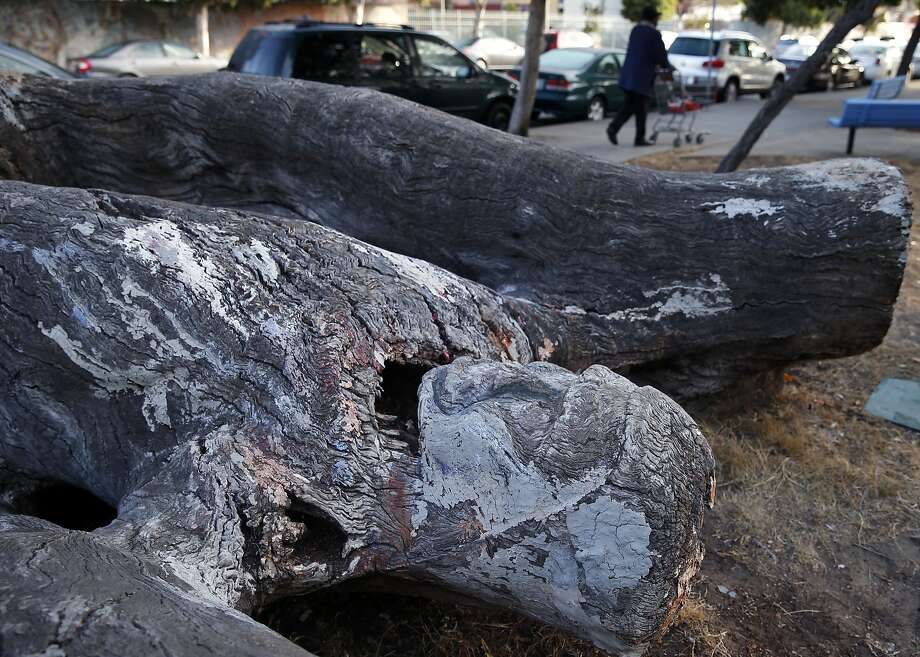 A carving of a human figure emerging from a tree trunk is located in a park at the corner of Golden Gate Avenue and Webster Street in San Francisco, Calif. on Friday, Sept. 18, 2015. Photo: Paul Chinn, The Chronicle
