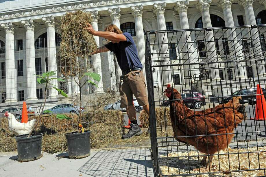 Scott Kellogg of the Radix Center sets up a chicken coop in a parking space on Washington Avenue as part of parking day on Friday Sept. 18, 2015 in Albany, N.Y.  (Michael P. Farrell/Times Union) Photo: Michael P. Farrell / 00033414A