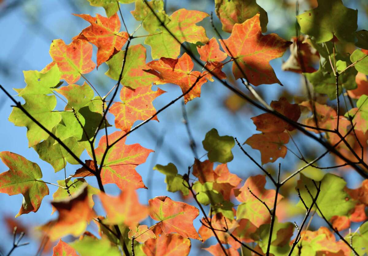 Early fall foliage Friday, Sept. 18, 2015 in Westport, Conn.