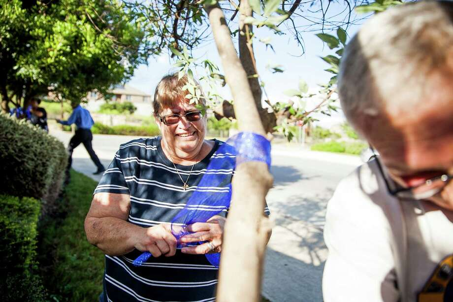 Claudia Richard ties a blue ribbon around a tree branch at the entrance of her neighborhood on Thursday. She is encouraging her neighbors to display the ribbons as a show of support for law encorcement. Photo: / / Julysa Sosa For the San Antonio Express-News