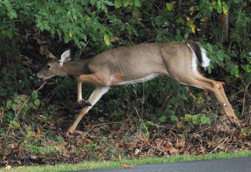 Ridgefield 188 deer kills