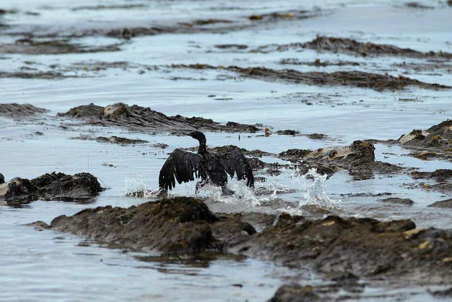 FILE - In this May 21, 2015 file photo, a bird covered in oil flaps its wings at Refugio State Beach, north of Goleta, Calif. A U.S. Senate committee is holding a field hearing on pipeline safety on Friday following a recent surge in accidents, including oil spills that fouled a Montana river and a scenic stretch of Southern California coastline. (AP Photo/Jae C. Hong, File) Photo: Jae C. Hong, STF / AP