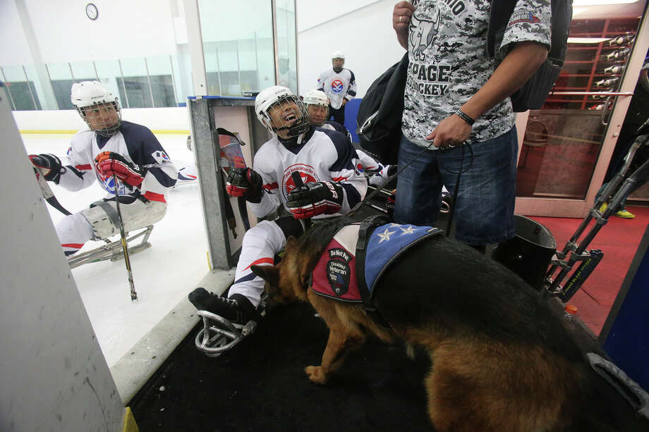 "San Antonio Rampage paralympic hockey player Ricardo Perez (right) intoduces his dog ""Francis"" to the South Korean paralympic hockey team Thursday September 17, 2015 at the Ice and Golf Center at Northwoods. The team had a scrimmage with the San Antonio Rampage sled hockey team and is preparing for the 2018 Winter Paralympics in Pyeongchang, South Korea. Photo: John Davenport, Staff / San Antonio Express-News / ©San Antonio Express-News/John Davenport"