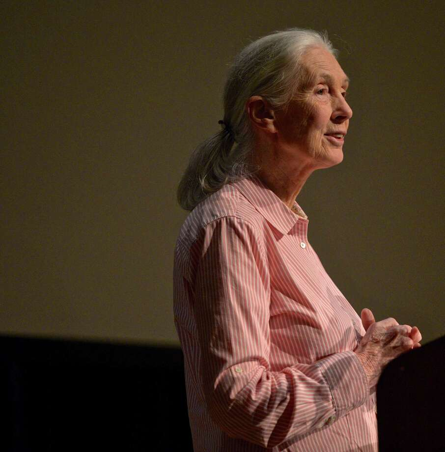 Jane Goodall, delivers a lecture on the relationships between humans, plants and animals in the White Hall auditorium on the Western Connecticut State University mid-town campus on Saturday afternoonin Danbury. Photo: H John Voorhees III / Hearst Connecticut Media / The News-Times