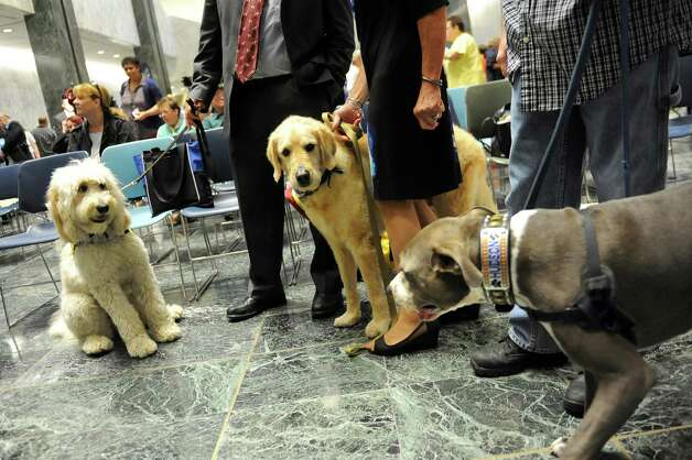 Hudson the Railroad Puppy, right, makes friends during Animal Advocacy Day on Wednesday, June 3, 2015, at the Legislative Office Building in Albany, N.Y. (Cindy Schultz / Times Union) Photo: Cindy Schultz / 00032083A